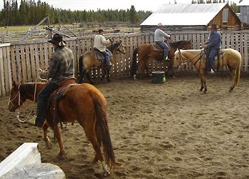 Learn the basics or upgrade your horse training skills
